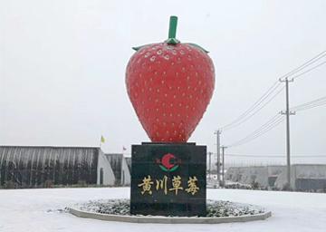 连云港黄川镇——草莓亚博yabo下载